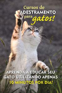 anuncio_gatos1